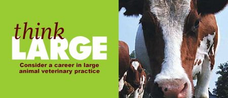 Consider the benefits of a career in large animal veterinary practice.